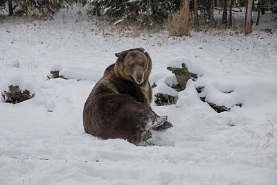 Photograph - Does This Snow Make My Butt Look Big by Teresa Wilson