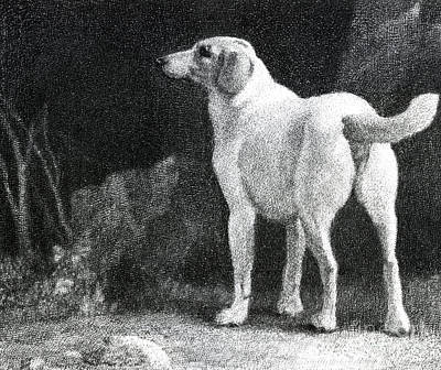 Doggy Drawing - Dog, 1788 by George Stubbs