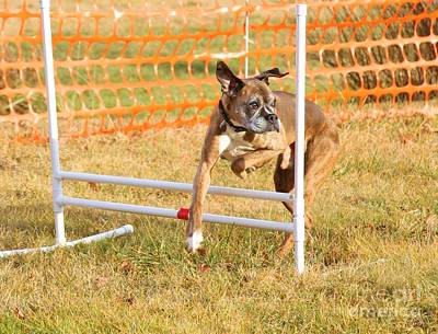 Photograph - Dog Agility by Debbie Stahre