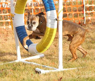 Photograph - Dog Agility Tire by Debbie Stahre