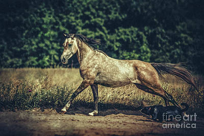 Photograph - Dog And Arabian Horse Running by Dimitar Hristov
