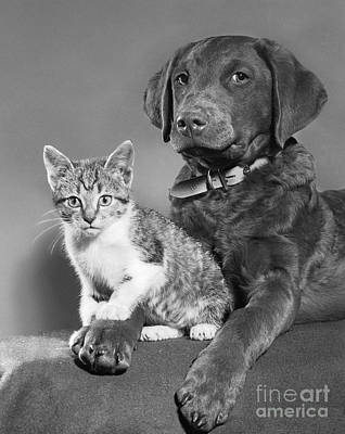Pet Care Photograph - Dog And Cat, C.1950s by D. Corson/ClassicStock
