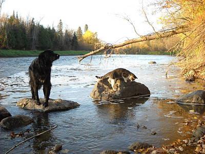Photograph - Dog And Cat Exploring Rocks by Kent Lorentzen