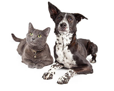 Cats And Dogs Photograph - Dog And Cat Laying Looking Up by Susan Schmitz