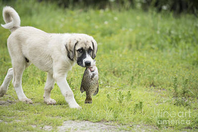 Adorable Photograph - Dog Gone Fishing by Juli Scalzi