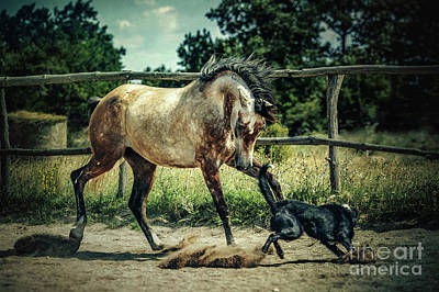 Photograph - Dog And Horse Playing Together by Dimitar Hristov