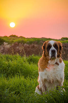 Photograph - Dog And Sunset by Mark Perelmuter