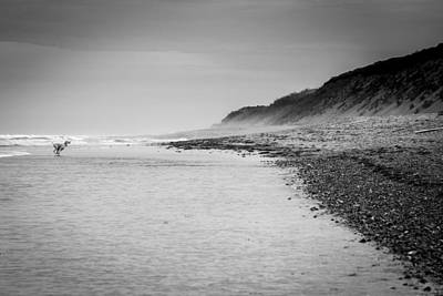 Black And White Photograph - Dog And The Beach by Alexander Mendoza