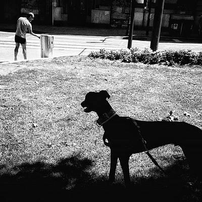 Animals Wall Art - Photograph - #dog #animal #pet #dogsofinstagram by Rafa Rivas