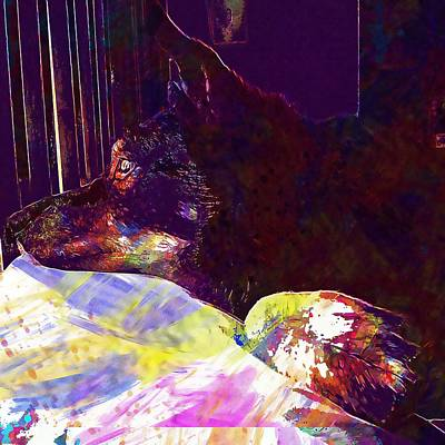 Dog Australian Kelpie Pet Head  Art Print