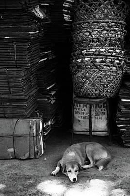 Photograph - Dog Basket by Jez C Self