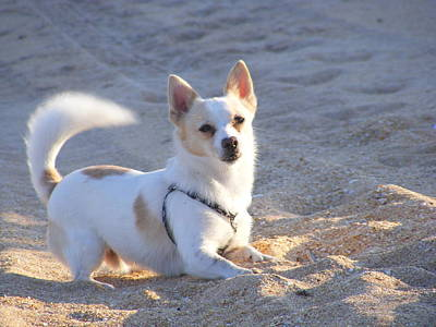 Photograph - Dog Beach Day by Mandy Shupp