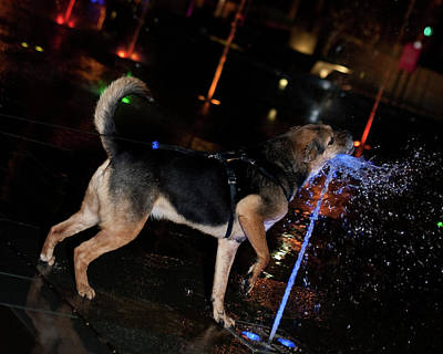 Photograph - Dog Catching Fountain by David Coblitz