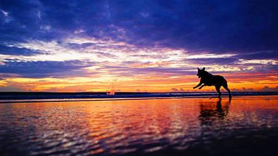 Dog Chasing Stick At Sunrise Art Print
