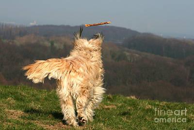 Dog Chasing Stick Print by Brinkmann/Okapia