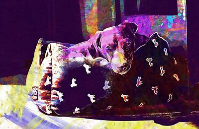 Dachshund Art Digital Art - Dog Dachshund Looking Portrait  by PixBreak Art