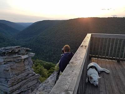 Photograph - Dog Days Of Summer by Amber Kresge