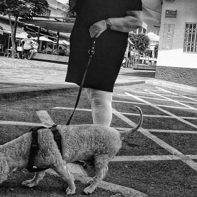 Pets Wall Art - Photograph - #dog #dogslover #animals #pet #people by Rafa Rivas