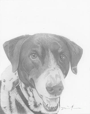 Drawing - Dog Drawing Orion by Dave Nevue