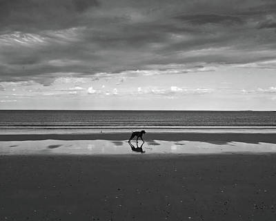 Photograph - Dog Enjoying The Storm On Revere Beach Revere Ma by Toby McGuire