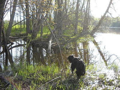 Photograph - Dog Exploring Mississippi River Bank by Kent Lorentzen