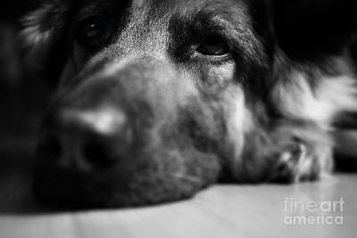 Frank J Casella Royalty-Free and Rights-Managed Images - Dog Eyes Always Watching by Frank J Casella