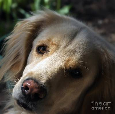 Frank J Casella Royalty-Free and Rights-Managed Images - Dog Eyes by Frank J Casella