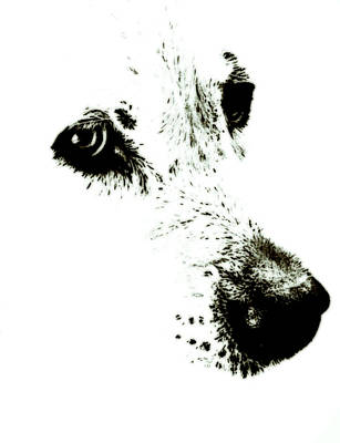 White Shirt Painting - Dog Face by Frank Tschakert