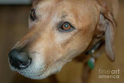 Photograph - Dog Friend by Mim White