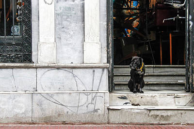 Photograph - Dog From The Block by Silvia Bruno