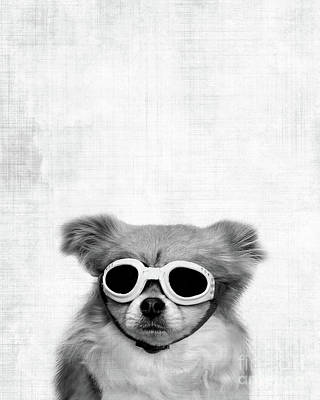 Dog Photograph - Goggles  by Delphimages Photo Creations
