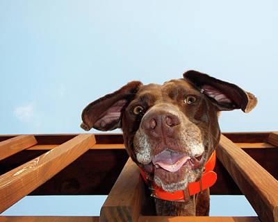 Dog Gone Crazy Art Print