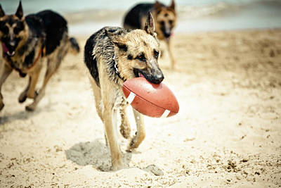 People On Beach Wall Art - Photograph - Dog Holding Ball In Mouth by R. Brandon Harris