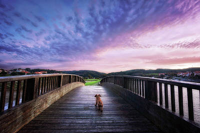 Abandoned Pets Photograph - Dog In A Bridge by Mikel Martinez de Osaba