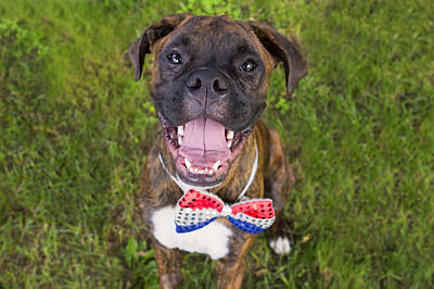 Brindle Photograph - Dog In Bow Tie by Stephanie McDowell