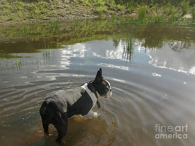 Photograph - Dog In Pond by Patricia Hofmeester