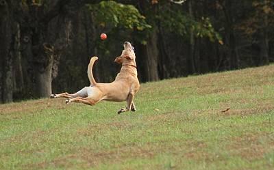 Dog In The Air Original by Valia Bradshaw