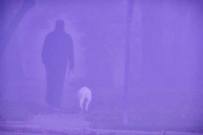 Fine Dining - Dog in the Fog by Trent Garverick