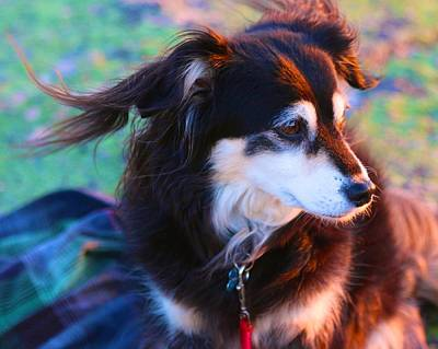 Photograph - Dog In The Sunset Breeze by Polly Castor
