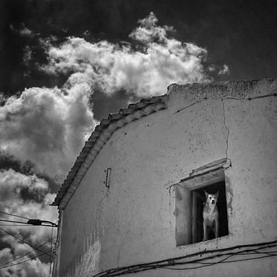 Dog Photograph - Dog In The Window #dog #pets #animals by Rafa Rivas