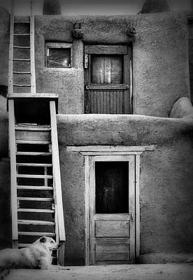 Photograph - Dog Ladders And Doors In Black And White by Nadalyn Larsen
