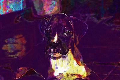 Boxer Puppy Digital Art - Dog Look Boxer Dog Puppy  by PixBreak Art