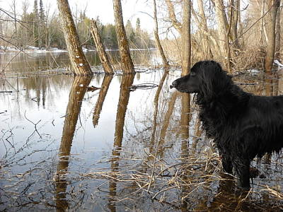 Photograph - Dog Looking At Swollen River by Kent Lorentzen