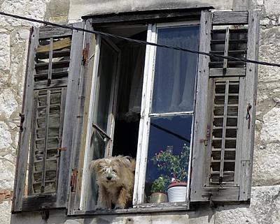 Blue Hues - Dog Looking Out Of A Window In Split Croatia by Rick Rosenshein