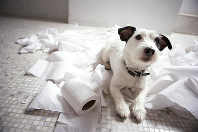 Color Image Photograph - Dog Lying On Bathroom Floor Amongst Shredded Lavatory Paper by Chris Amaral