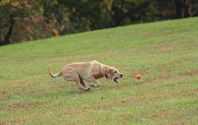 Dog Moments Original by Valia Bradshaw