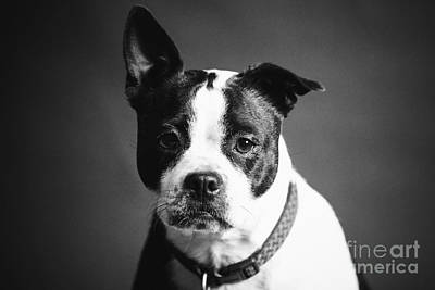 Photograph - Dog - Monochrome 1 by Jesse Watrous
