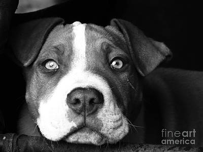 Photograph - Dog - Monochrome 2 by Jesse Watrous