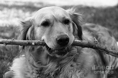Photograph - Dog - Monochrome 4 by Jesse Watrous