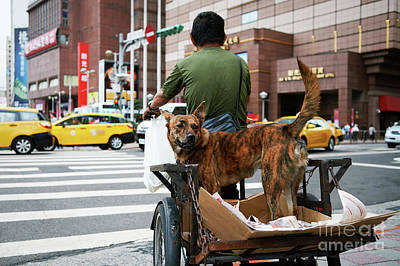 Photograph - Dog On Bike by Dean Harte